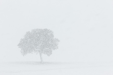"© Rojo Sache ""Lonely tree"""