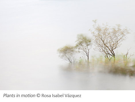 Rosa-Isabel-Vazquez_Plants-in-motion